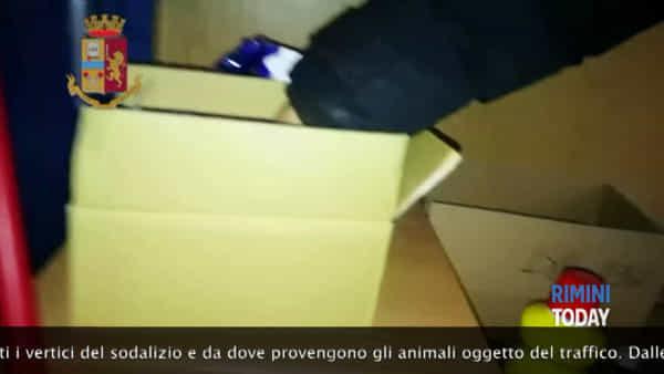 Traffico di cuccioli dalla Slovacchia, 7 persone in manette | IL VIDEO