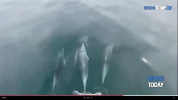 VIDEO | Sorpresa durante la gita in barca: arriva un branco di delfini a giocare