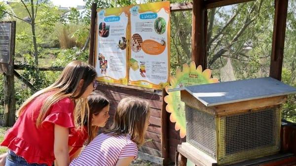 Caccia alla Regina: il lavoro e la dolcezza delle api si scoprono a Oltremare