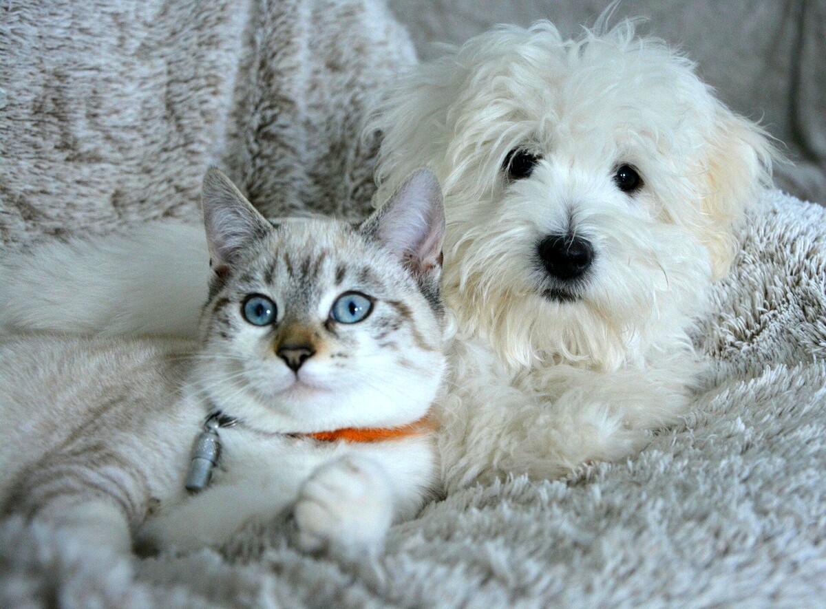 Casa pet friendly, consigli per arredare la stanza di cani e gatti