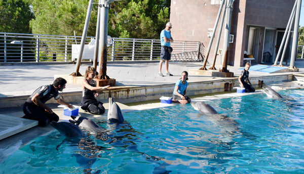 Veera in Oltremare with other dolphins and trainer staff-2